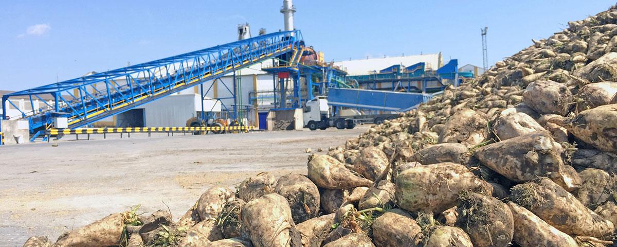 fabrica-guadalete-remolacha-azucarera